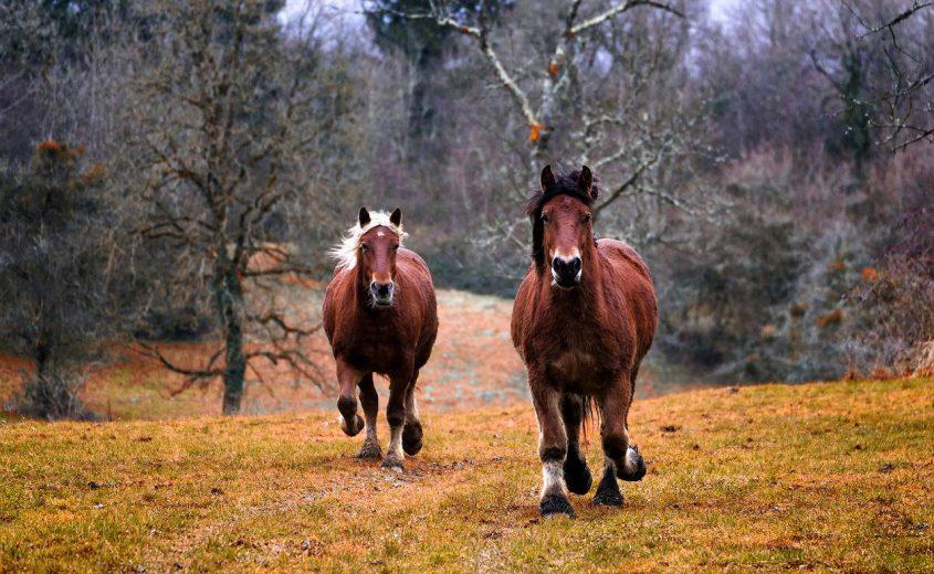 De voordelen van Subli paardenvoer